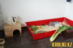кролик-Chaplin