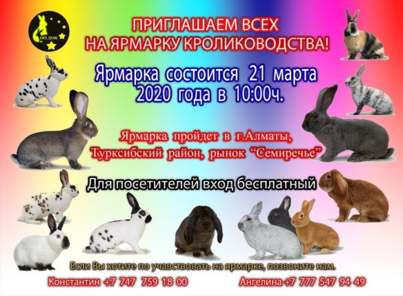 Ярмарка алматы по кроликам